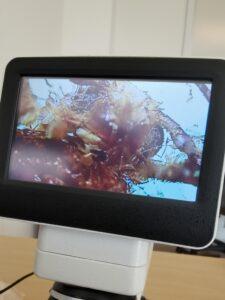 mikroskop2 225x300 1